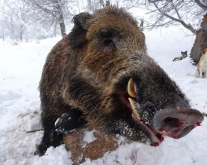 m_boar