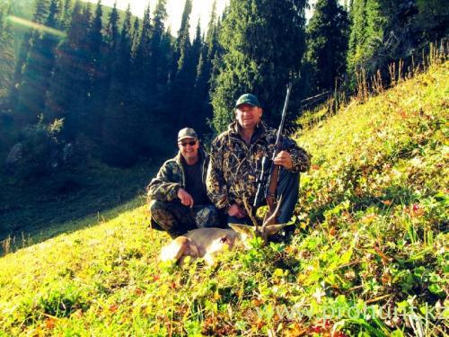 Roe Deer Hunting1