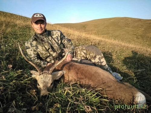 Roe Deer Hunting3