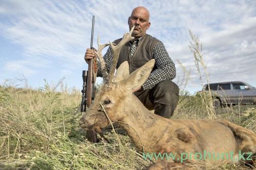 Roe Deer Hunting5