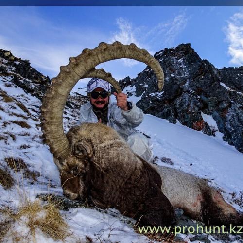 Ibex Hunting1