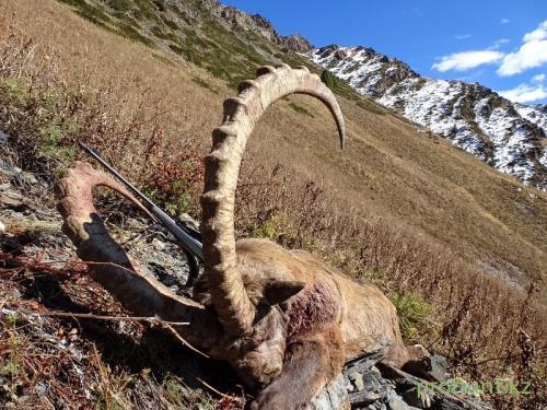Ibex Hunting10
