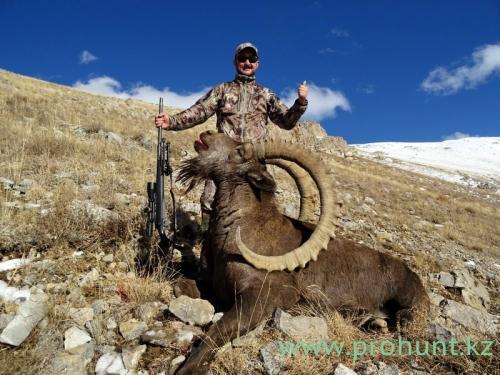 Ibex Hunting12