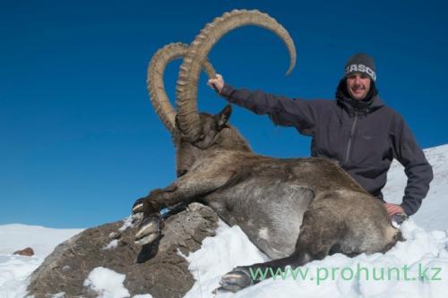 Ibex Hunting20