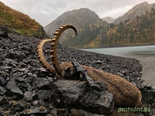 Ibex Hunting21