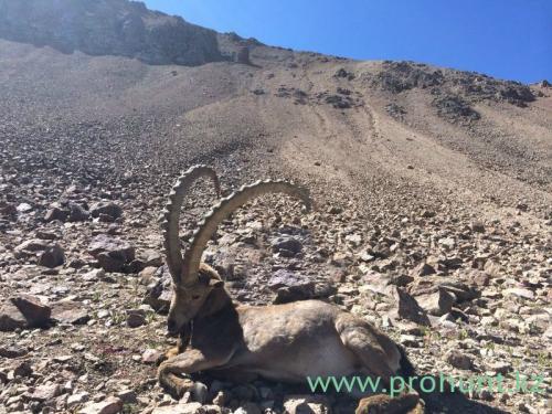 Ibex Hunting25