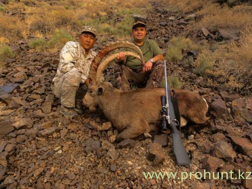 Ibex Hunting27