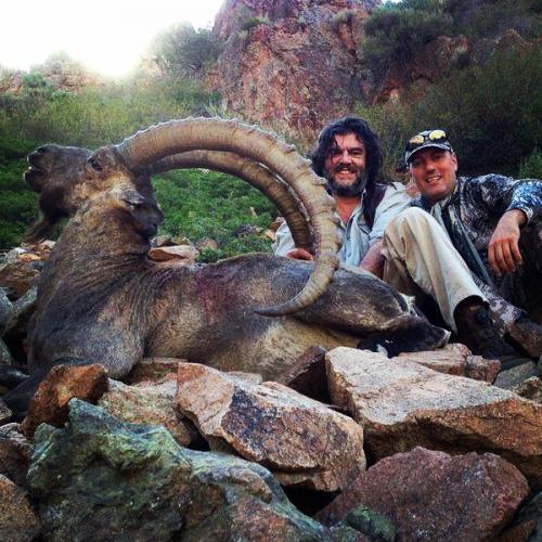 Ibex Hunting32