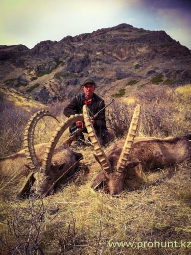 Ibex Hunting35