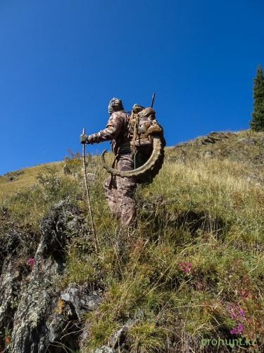 Ibex Hunting37