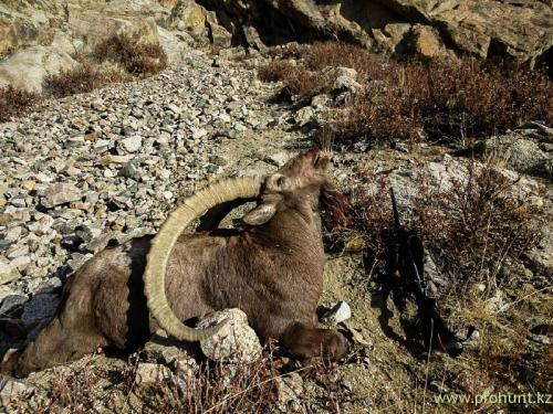 Ibex Hunting4