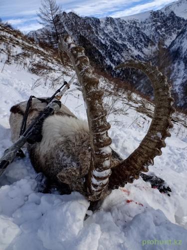 Ibex Hunting5